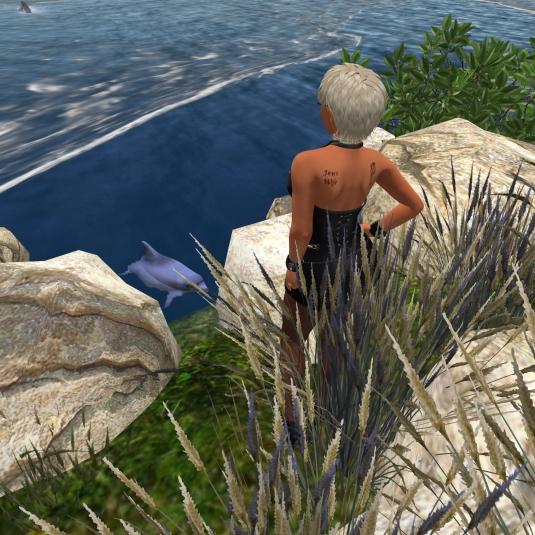 July 6th: Diomita at Noelia Island doing the hunt (2)